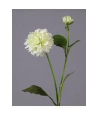 Георгин бело-зеленый