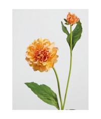Георгин персиковый в-48 см, д-8 см 1цв 1бут