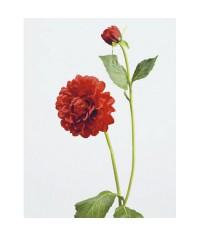 Георгин красный в-48 см, д-8 см 1цв 1бут