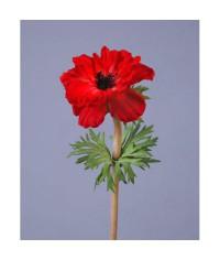 Анемон красно-бордовый д-10 см